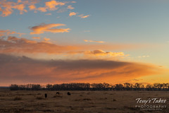 Bison grazing beneath the sunrise