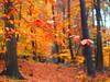 SUNDAYMORNINGWALK THROUGH THE AUTUMNFORREST  WPB120536 (hans 1960) Tags: november leaves blätter wald forrest laub foliage fall farben colours trees bäume magic zauber rain regen rainy home heimat ruhe stille harmony farbenpracht herbstzauber autumn stamm