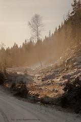 20171115003709 (koppomcolors) Tags: koppomcolors forest skog winter värmland varmland vinter sweden sverige
