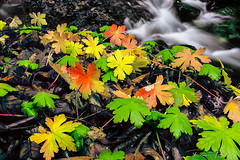 mountain colours (Plamen Troshev) Tags: autumn new nature river centralbalkan explore landscape grass waterfall red yellow green