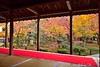 Enkouji Temple (Awayfrom Tokyo) Tags: red kyoto fall foliage japan culture temple autumn tree garden carpet