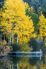 Fall Colors - Gull Lake, Autumn 2017 (www.karltonhuberphotography.com) Tags: 2017 autumn boatdock brisk california calm chilly easternsierra exploring fallcolors fallcolorstrip gulllake junelakeloop karltonhuber lake landscape morninglight nature outdoors peaceful reflections verticalimage water