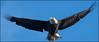 Eagle (Nikographer [Jon]) Tags: baldeagle susquehannariver md maryland 20171127d850001114 d850 600mmf4 migration fall nov november 2017