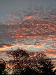 colourful evening sky [explored] (carol_malky) Tags: colourful evening sky sunset silhouettes trees clouds sunlight explored