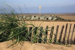 Les grains de sable ont profité du vent qui a soufflé sur nos côtes pour virevolter sur la plage. (thierrycoulon1) Tags: horizon littoral vent borddemer atlantique ocean mer plage chatelaillon