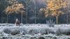 Frozen Fairy Tale! (karindebruin) Tags: autumn fallcolors grass gras geel yellow horse paard bomen trees frost vorst belgie belgium peerdsbos