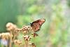 Orange Beauty (RichSeattle) Tags: richseattle nikon d750 california palmsprings livingdesert zoo animal palmspringszoo livingdesertzoo wildlife nature