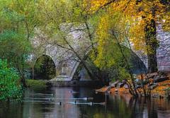 Autumn Scenery (bjorbrei) Tags: water river shore stream bridge tunnel trees branches ducks autumn fall ankerbrua eventyrbrua akerselva oslo norway