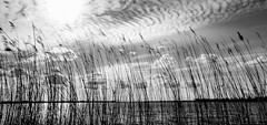 Thru the reed (Beppe Rijs) Tags: deutschland germany schleswigholstein schlei wolken wolkendecke landschaft landscape natur nature horizont horizon clouds farbig colored line linie river fjord fluss ufer reet water wasser schilf black blackandwhite white grey schwarzweiss schwarz weis