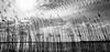 Thru the reed (Beppe Rijs) Tags: deutschland germany schleswigholstein schlei wolken wolkendecke landschaft landscape natur nature horizont horizon clouds farbig colored line linie river fjord fluss ufer reet water wasser schilf black blackandwhite white grey schwarzweiss schwarz weis