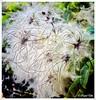 Flor rara (ℝakel_ℰlke ﴾͡๏̯͡๏﴿) Tags: rakel elke raquel rakelelke rachel rakelmurcia españa spain espagne europa europe fotografía fineart photo photography nikon nikond300s d300s nikkor18–200mm objetivo18–200 flor blume fleur fiore flower květina blomst lore kukka blodyn bloem blóm kwiat floare gėlė virág цветок blomma