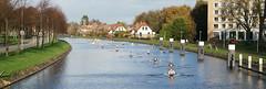 Rijn-Schiekanaal (Ronaldc5) Tags: sony a99ii leiden sal2470z knrb roeien