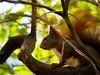 Squirrel (xy5661) Tags: eichhörnchen intheforestigo stadtpark