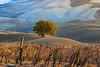 toscana4R-27 (Stanislav Don Simon) Tags: agro castle cloud fog italy sky sunrise sunset true tuscany деревня дерево закат замок италия небо облака пашня поле рассвет тоскана