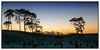 sunrise over the graveyard (Habitualmurph) Tags: ireland thecurragh kildare winter sunrise canon70d