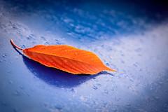 Autumn Drops (NathalieSt) Tags: europe hérault occitanie languedocroussillonfrance nikon nikond750 nikonpassion nikonphotography saintdrezery car voiture