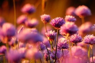 Friday Flowers HFF