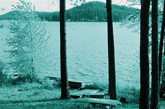 10.17 LLWM XP2 Xpro Scan 1 E07 V2 (Jcicely) Tags: crossprocessingxpro lakeview loonlake loonlakewithmarvin october trees water
