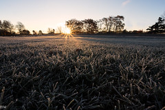 First Frost (MikeWeinhold) Tags: lowell frost grass sunrise 6d 1740mm