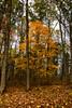 Fall (jplords) Tags: fall colors fallcolors woodlandphotography trees woodland tennessee bushes plants outdoor outdoors outdoorphotography foliage landscape landscapephotography light winter leaf leaves cedar cedars cedartree cedarsoflebanon
