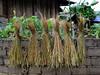 North and Central Vietnam (titydevries) Tags: vietnam asia azië travel reis rondreis people mensen culture kultuur scenery landschap traditional tradition cemetery kerkhoven graveyards socialism socialisme rural rijst binnenland hanoi hué hoian halongbay