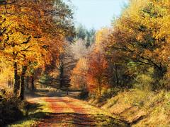 Autumn Trail (Mark Wasteney) Tags: autumn autumncolours trees forest woods walk trail northdevon devon westcountry photostitch