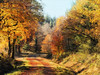 Autumn Trail (Mark Wasteney) Tags: autumn autumncolours trees forest woods walk trail northdevon devon westcountry photostitch
