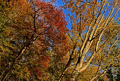 2017_October_791 (David OMalley) Tags: west chester kennet square pa pennsylvania canon g7x mark ii powershot canonpowershotg7xmarkii canong7xmarkii g7xmarkii laurel hill cemetery east falls