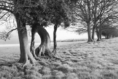The nonconformist (david.hogan7) Tags: south downs park hill tree line row black white art moody field forest winter east meon canoneos