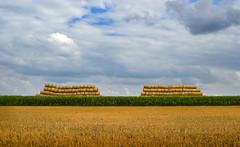 Champ cultivé (‹ Wim ›) Tags: straw field yellow green france mais harvest clouds champcultivé