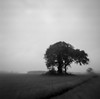 Time of dreams (Rosenthal Photography) Tags: ilfordfp4 wense twiste einsamerbaum baum landschaft mittelformat 20171101 6x6 städte schwarzweiss anderlingen agfaclicki flippedlens analog bnwbw dörfer siedlungen time dreams landscape flipped revertlens nature mood tree lonelytree lonely agfa click click1 meniscus 725mm blackandwhite f88 ilford fp4 fp4plus epson v800