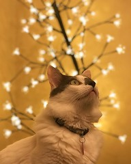 (rfellipe) Tags: catmoments cat feralcat gato luz luzes bokeh imaginarium light