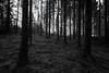 Black & White Forest Light (NaturaRAW) Tags: 2017 canonef1635f4lisusm canoneos6d färgelanda kullberg landskap mossa natur skog svartvitt träd vinter lillesäter västragötalandslän sverige se