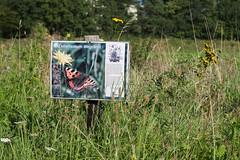 CKuchem-4793 (christine_kuchem) Tags: beeren blumen blumenwiese blüte blüten bonn büsche dünstekoven gräser hecke info inforamtionsschild information infoschild kiesgrube kottenforst lebensraum nabu nahrung natur naturschutzgebiet pflanzen rainfarn renaturierung schild schutz strasenrand sträucher swisttal vogelschutzgehölz wegrand wiese wildblumen wildnis wildpflanzen wildsträucher heimisch naturnah natürlich wild