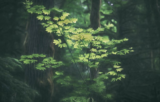 A haiku for the forest
