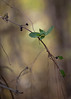 alone in the woods (Mr. Greenjeans) Tags: louisiana vine undergrowth woods dof nature