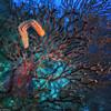 Bristle Worm (jnhPhoto) Tags: jnhphoto stlucia scuba scubadiving diving underwater ocean bristleworm coral sonyrx100v