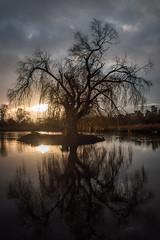 Mystical Willow (Jannik Peters) Tags: wheeping willow nikon 2470 2470mm 28 light morning mystical beautiful reflection lake