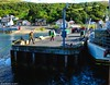 Scotland West Highlands Argyll the paddle steamer Waverley docking in the evening at Loch Ranza island of Arran 16 July 2017 by Anne MacKay (Anne MacKay images of interest & wonder) Tags: scotland west highlands argyll paddle steamer waverley docking evening loch ranza pier island arran clyde passenger ship xs1 16 july 2017 picture by anne mackay