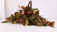 Frutti antichi: Nespole di Germania (Aellevì) Tags: mespilusgermanica rosaceae autunno inverno