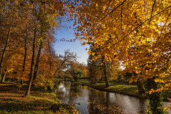 Say goodby to autumn! (wimvandemeerendonk, back home) Tags: amersfoort autumn color colors colours colour forest goldenhour gold light netherlands nederland outdoors outdoor orange provincieutrecht park sony tree trees thenetherlands wimvandem reflection stream ☯thefifthessence☯