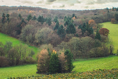 DSC_0199 (Understudy Photography) Tags: nationaltrust nature architecture christmas polsden polsdenlacey kent dorking surrey london guilford decoration natural polesdenlacey landscape autumn winter fall england scenery history detail nikon photography atmosphere