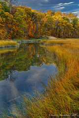 Fall Colors (HarrySchue) Tags: nationalparks places sagamorehillny fall fallcolors water lisound trees marsh reflections