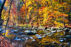 River Flowing Through Autumn Forest in New Jersey (George Oze) Tags: kenlockwoodgorge autumn colorful creek daytime deciduous fall foligae forested forestland horizontal hunterdoncounty landscape lowangleview nature newjersey nopeople nobody northamerica outdoors picturesque quiet reflections relaxing river rocky rockycreek scenic seasons serene splendid tranquil travel trees usa vivid water wood califon unitedstatesofamerica us