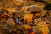 .Danbo is meeting shrooms. (....Natalie....) Tags: danbo forest autumn