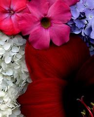 58618.08 bouquet (horticultural art) Tags: horticulturalart flowers bouquet