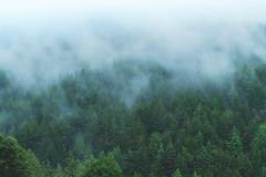 Purisimo Creek Hike (sahilajoshi) Tags: hike california redwoods fog