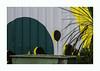 Sans titre (hélène chantemerle) Tags: palissade plantes poubelle gris vert jaune fence plants trash grey yellow green street