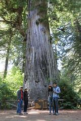 Big.Tree.VandaP (redwoodcoaster) Tags: humboldt redwoods redwood coast national park travel california eurekaca