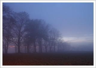 a foggy autumn evening (in explore)